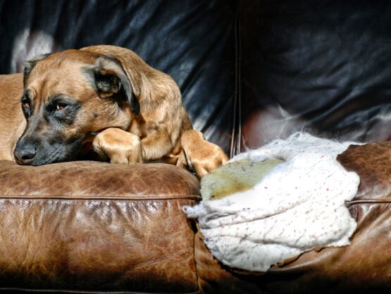 leather couch cat damage repair cape cod
